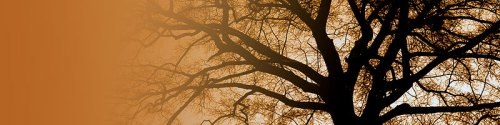 header Tree_at_Sunset